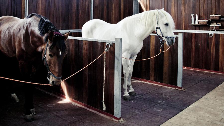 pikdame-sporthorses_3